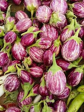 brinjal variety to make baingan masala
